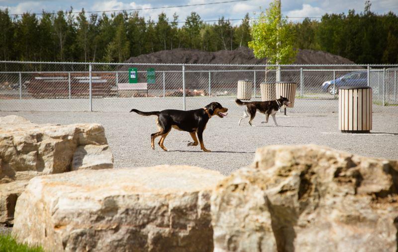 Chiens au parc canin voisin de la SPAA, rue de l'Acadie