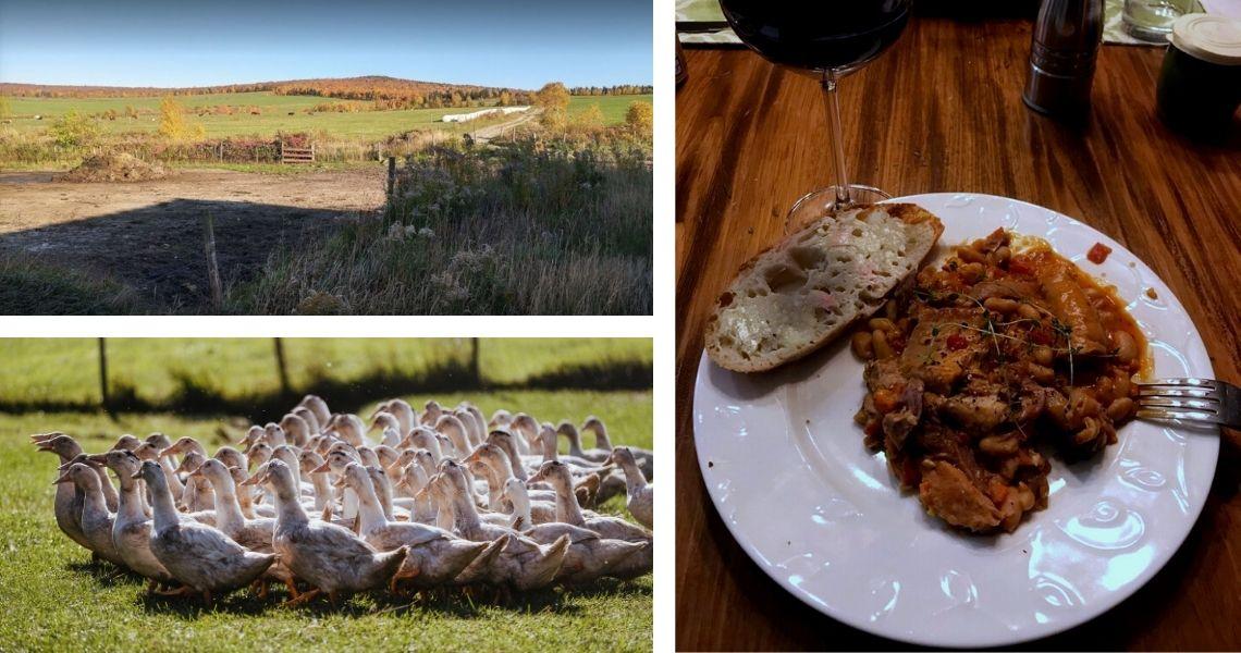 Quand les bovins et les canards respirent le bon air frais, la différence se sent dans tous nos plats. Crédit photo: Les Maximes (gauche bas)