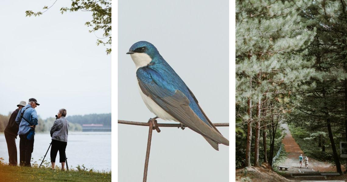 Près de l'eau ou en forêt, prenez le temps de regarder. Crédits photos: Les Maximes (gauche, droite), Alain Charette (centre)