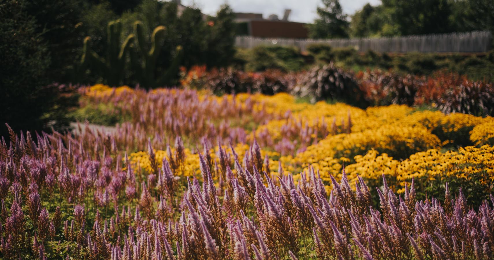 À l'automne, les semences de plusieurs cultivars sont prélevées pour la reproduction en serre - Crédit photo: Les Maximes