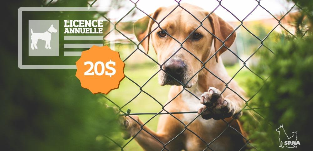 Vous possédez un chien ? Il est temps de renouveler sa licence annuelle