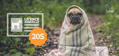 Propriétaires de chien, il est temps de renouveler votre licence