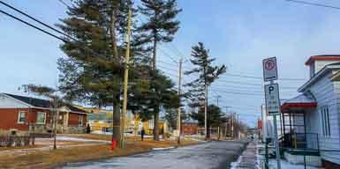 Remplacement d'arbres en bordure de la rue Monfette