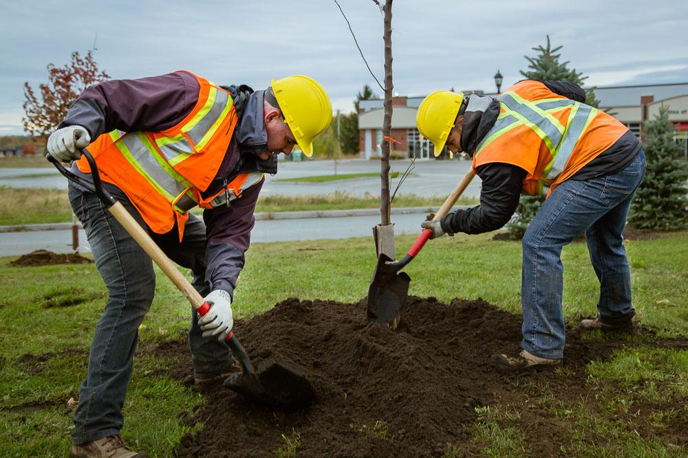 L'équipe d'arboriculture de Victoriaville, avec la collaboration du Centre de formation en entreprise et récupération Normand-Maurice, plantera, du 25 mai au 10 juin prochain, plus de 225 arbres.