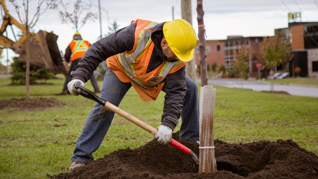 Près de 125 nouveaux arbres seront plantés en 2018 sur le territoire de Victoriaville à compter du printemps.