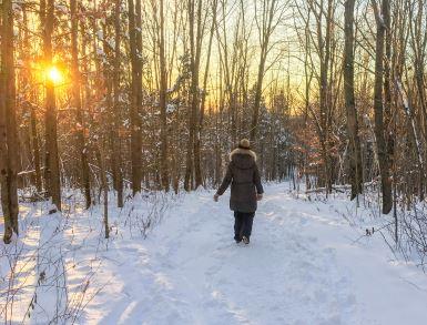 Coupe d'assainissement pour améliorer l'état de santé d'une partie de la forêt du mont Arthabaska