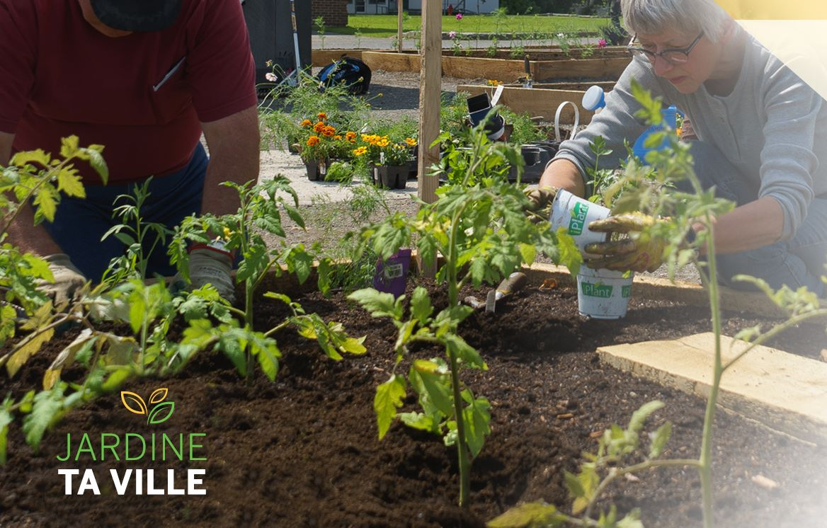 L'agriculture urbaine à Victoriaville: la parole est aux citoyens
